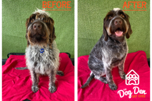 https://www.thedogden.co.nz/wp-content/uploads/2020/08/floyd_before_after-300x200.png
